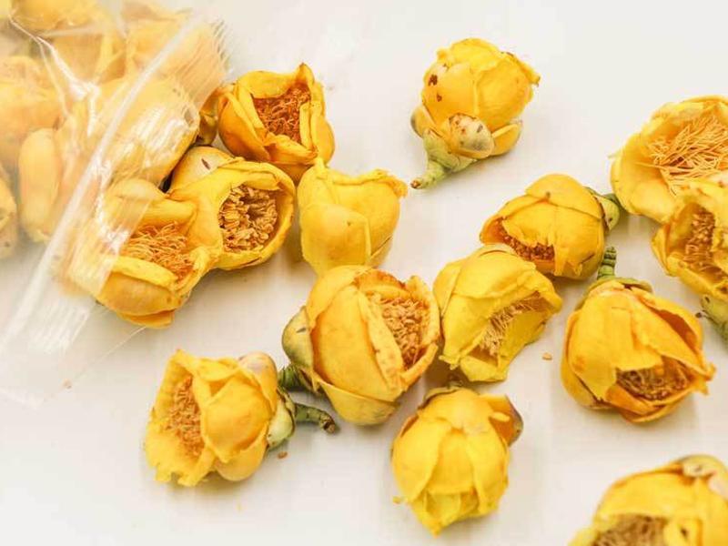 广西特产金花茶主要功效是什么?金花茶的栽